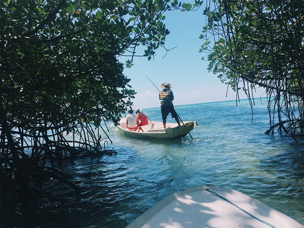 Boat ride through the Mangrove forest