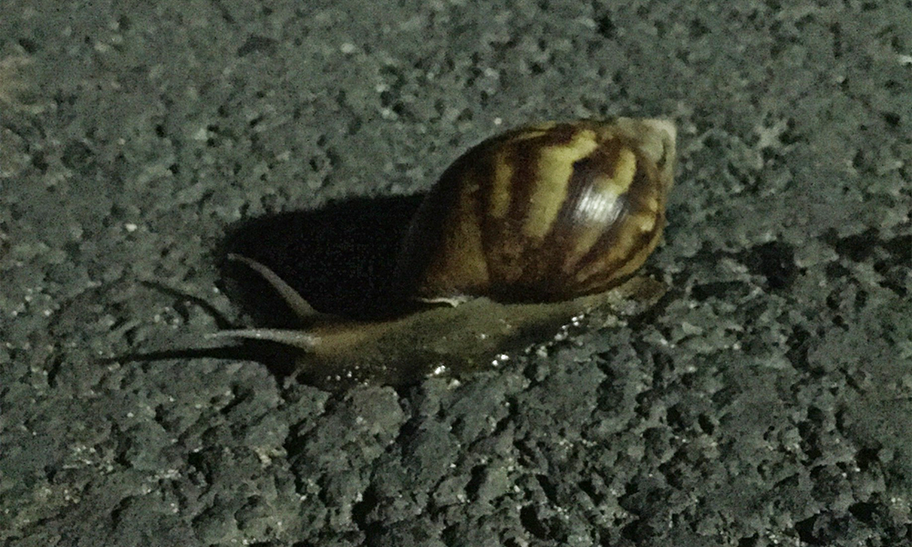 We came across a snail on our ride home. Biggest snail I've ever seen. So I made him stop so I could take a picture of it.